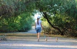 Mulher que anda com cães Fotos de Stock