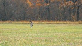 Mulher que anda no campo na frente da floresta filme
