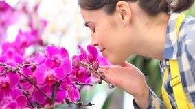 Mulher que anda no jardim das flores, dos toques e dos cheiros uma orquídea e um pulverizador nas folhas vídeos de arquivo
