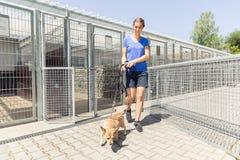 Mulher que anda um cão no abrigo animal imagens de stock royalty free