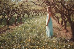 Mulher que aprecia o sol em um pomar Fotografia de Stock Royalty Free