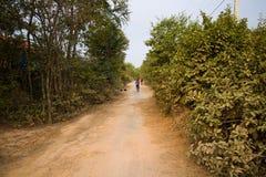 Mulher que Bicycling em uma estrada em cães rurais de Camboja Ásia fotografia de stock royalty free