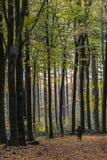 Mulher que caminha na floresta do outono Foto de Stock