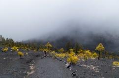 Mulher que caminha no La Palma, Ilhas Canárias, Espanha Fotografia de Stock Royalty Free