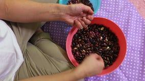 Mulher que classifica feijões coloridos filme