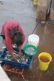 Mulher que coleta peixes Imagens de Stock