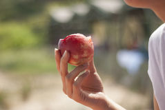 Mulher que come o fruto fresco Imagens de Stock Royalty Free