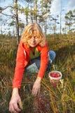 Mulher que escolhe airelas orgânicas selvagens Fotos de Stock Royalty Free