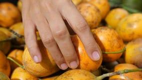 Mulher que escolhe frutos de paixão maduros na mercearia orgânica Compra dos frutos tropicais 4K Bali, Indonésia vídeos de arquivo