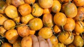 Mulher que escolhe frutos de paixão maduros na mercearia orgânica 4K Bali, Indonésia vídeos de arquivo