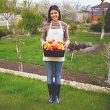 Mulher que está com maçãs da cesta Imagens de Stock Royalty Free