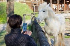 Mulher que fotografa um cavalo branco atrás de uma cerca de madeira Fotos de Stock Royalty Free