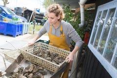 Mulher que guarda a bandeja das ostras à disposição fora foto de stock