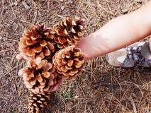 Mulher que guarda cones do pinho Foto de Stock Royalty Free