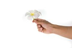 Mulher que guarda a flor branca na mão Fotografia de Stock Royalty Free
