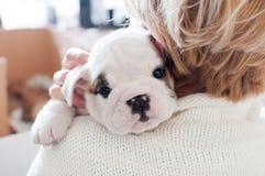 Mulher que guarda o cachorrinho inglês branco do buldogue Imagem de Stock