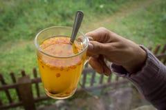Mulher que guarda o copo com chá dos espinheiros cervais de mar imagem de stock