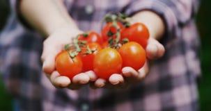 Mulher que guarda tomates no jardim 4k vídeos de arquivo