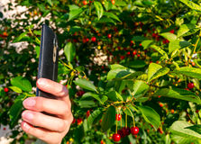 Mulher que guarda um telefone esperto em sua mão Fotos de Stock