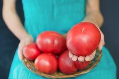 Mulher que guarda um tomate muito grande, em seus joelhos uma cesta com tomates imagens de stock
