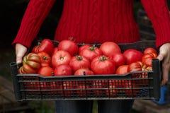 Mulher que guarda uma caixa do tomate imagem de stock royalty free