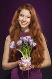Mulher que guardara o flowerpot com açafrões Fotos de Stock Royalty Free