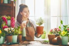Mulher que importa-se com suas plantas foto de stock