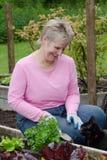 Mulher que jardina com gato Fotos de Stock