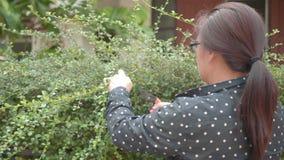 Mulher que jardina cortando a conversão pela tosquiadeira da conversão no jardim vídeos de arquivo