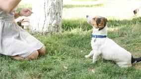 Mulher que joga com o cão na grama vídeos de arquivo