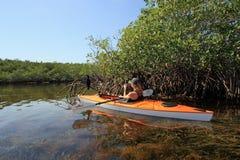 Mulher que kayaking no parque nacional de Biscayne, Florida imagens de stock