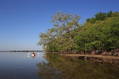 Mulher que kayaking no parque nacional de Biscayne, Florida foto de stock royalty free