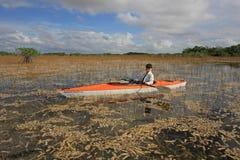 Mulher que kayaking no parque nacional dos marismas imagem de stock