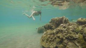 Mulher que mergulha nos óculos de proteção e na natação exótica de observação dos peixes sobre o recife de corais no mar Menina q vídeos de arquivo
