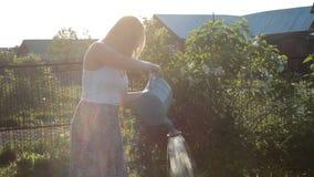 Mulher que molha o jardim ensolarado com lata molhando filme