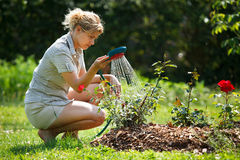 Mulher que molha a planta cor-de-rosa Imagens de Stock Royalty Free
