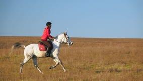 Mulher que monta um cavalo que galopa através do campo Movimento lento vídeos de arquivo