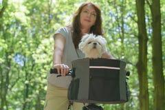 Mulher que monta uma bicicleta com seu cão Fotos de Stock