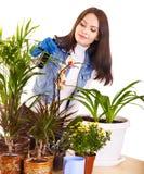 Mulher que ocupa do houseplant Fotos de Stock