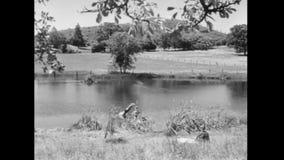 Mulher que olha o mergulho dos pares na lagoa vídeos de arquivo