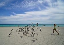 Mulher que persegue gaivotas Fotos de Stock Royalty Free