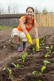 Mulher que planta o repolho Fotos de Stock Royalty Free