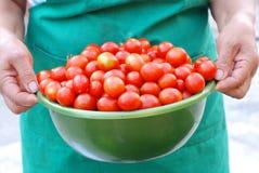 Mulher que prende uma bacia com tomates de cereja Imagem de Stock