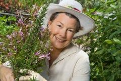 Mulher que recolhe Rosemary em seu jardim Imagens de Stock Royalty Free
