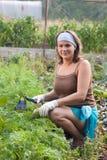 Mulher que remove ervas daninhas do jardim vegetal Fotos de Stock