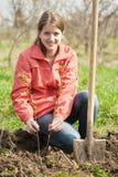 Mulher que restaura sprouts da framboesa foto de stock