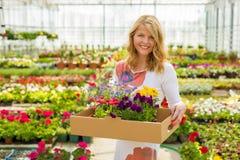 Mulher que selecciona flores para seu jardim Fotos de Stock