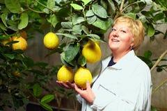 Mulher que seleciona a melhor fruta na estufa Imagens de Stock Royalty Free