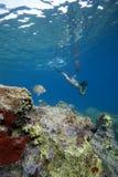 Mulher que snorkeling na água de turquesa Fotografia de Stock