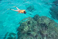 Mulher que snorkling na ilha de Similan Mar de Andaman Tailândia, grande f Foto de Stock Royalty Free